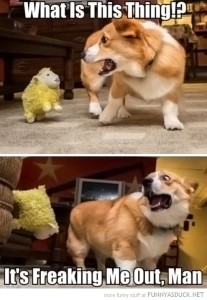 dog freaking out meme