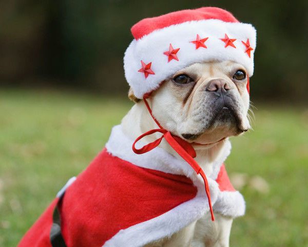 dogs dressed as santa