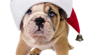 Cute_Dog_with_Santa_Hat_Transparent_PNG_Picture