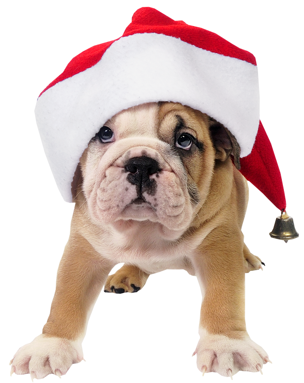 Cute images of dogs and cats dressed for the holiday