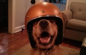bran the dog