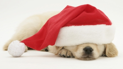 images of animals dressed as santa