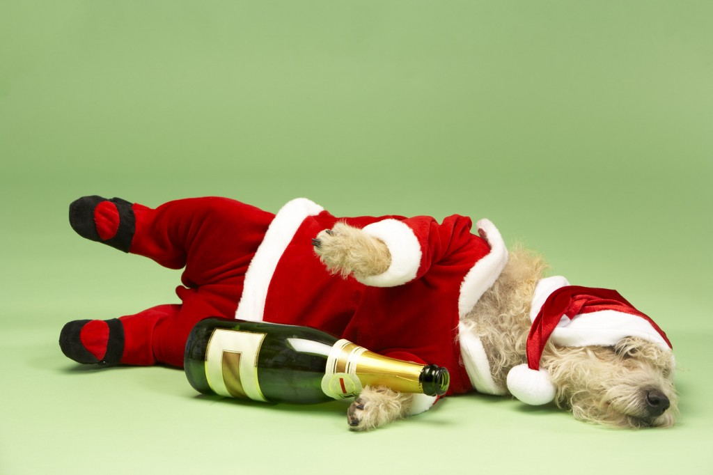 samll-dog-in-santa-costume-lying-down-with-champagne-bottle-1-1024x682