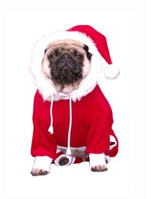 animals-celebrate-christmas