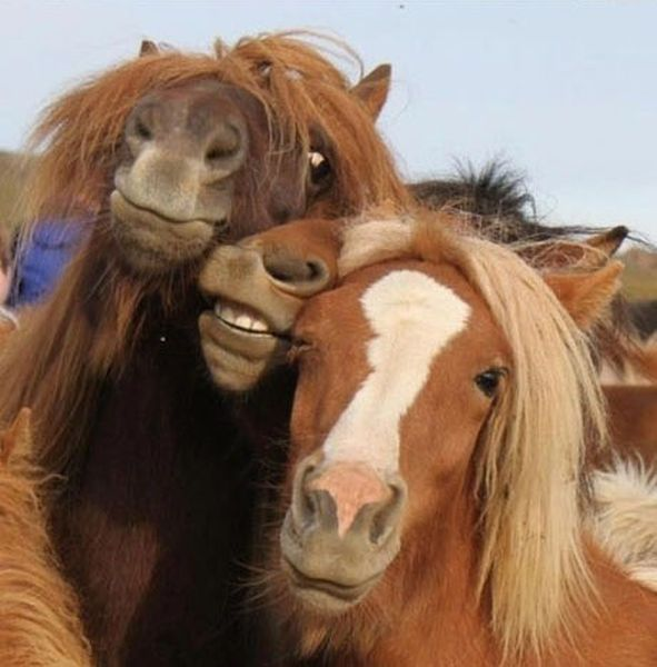 best selfies of 2013 - horses