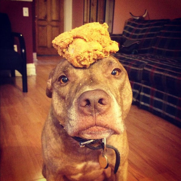 This Dog Is Amazing At Balancing Stuff On His Head