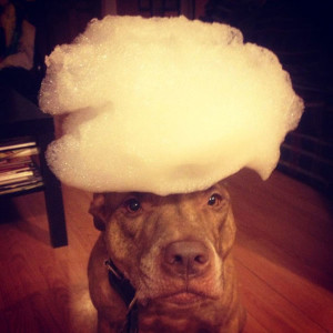 you_can_stack_anything_you_want_on_this_dogs_head_640_18