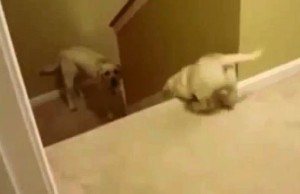 A-dog-and-a-cat-teaching-their-offspring-how-to-go-down-the-stairs