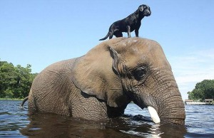 unusual-animal-friendship