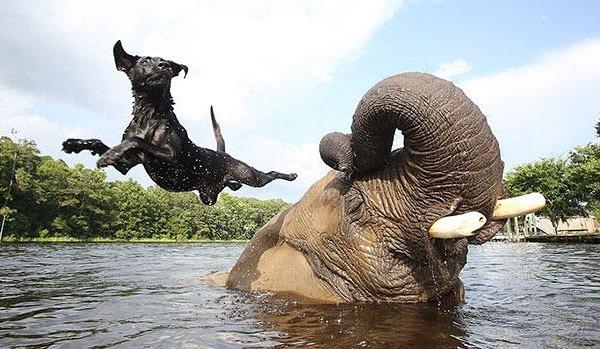 unusual-animal-friendship
