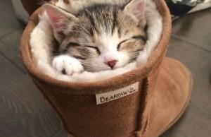 sleeping cat pictures