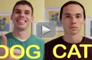 cat-friend-vs-dog-friend