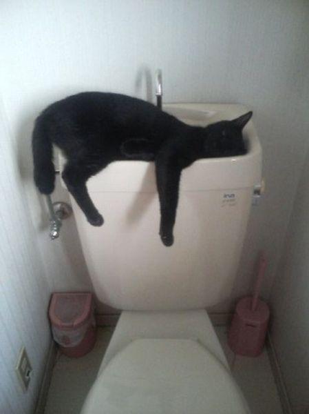 kot śpiący w spłuczce
