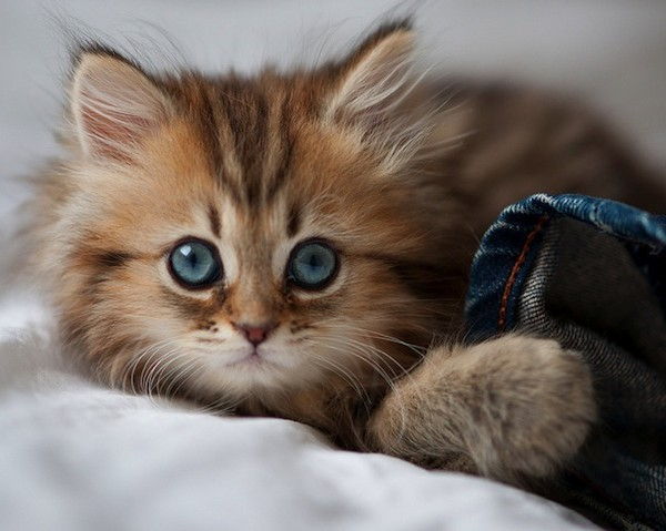 amazing cat pictures