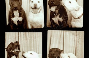 dogs in photoboth