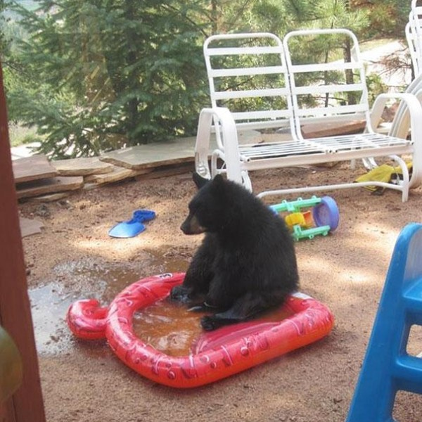 funny-bears-doing-human-things