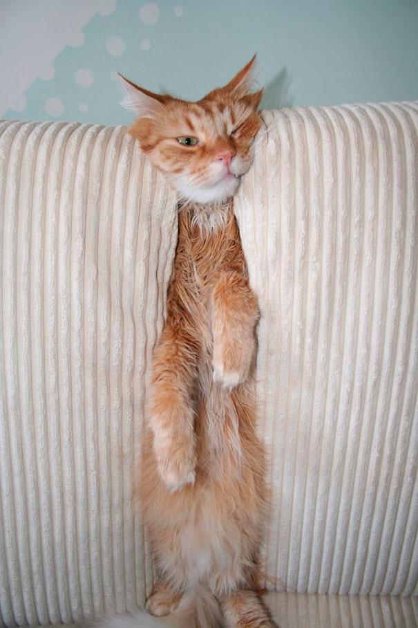 kot wciśnięty w sofę