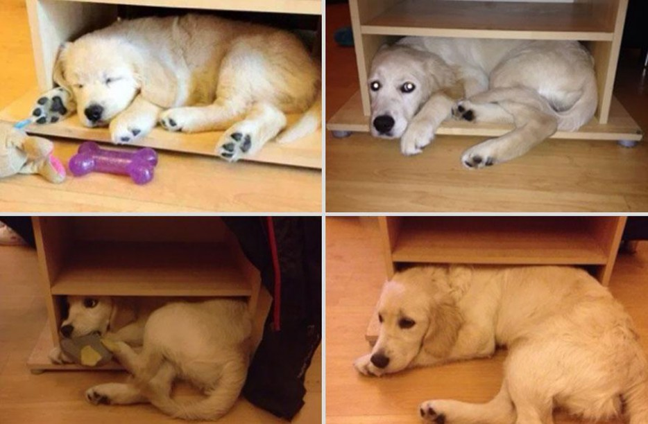 Adorable Before & After Photos Of Baby Animals Growing Up