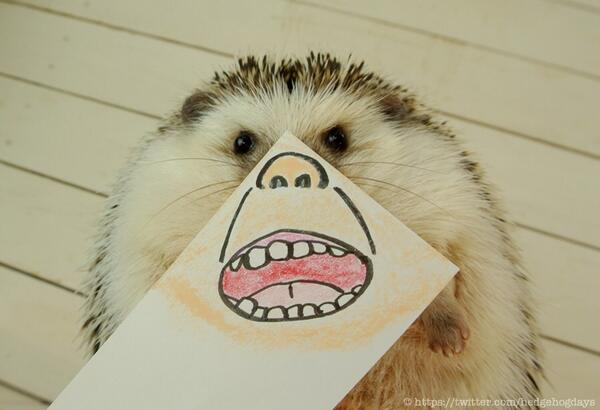 hedgehogdays