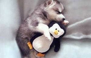 24 Animals Sleeping And Cuddling With Stuffed Animals