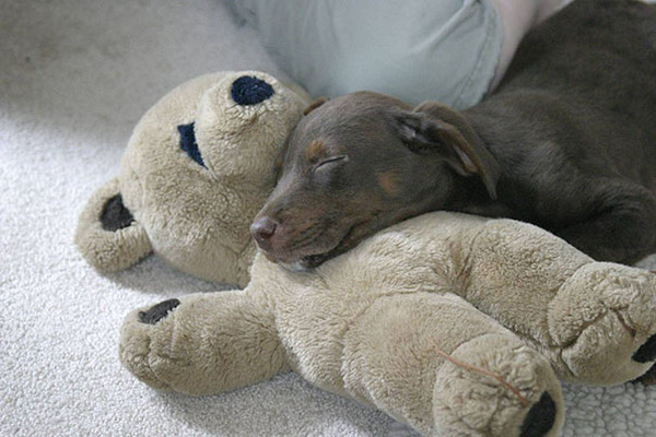 24 Animals Sleeping And Cuddling With Stuffed Animals