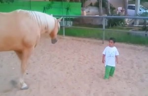 First Meeting Between a Special Little Boy and a Horse