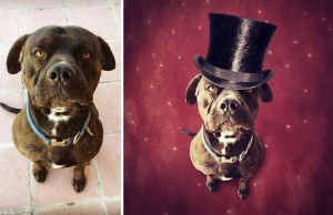 Surreal Pictures With Shelter Dogs.