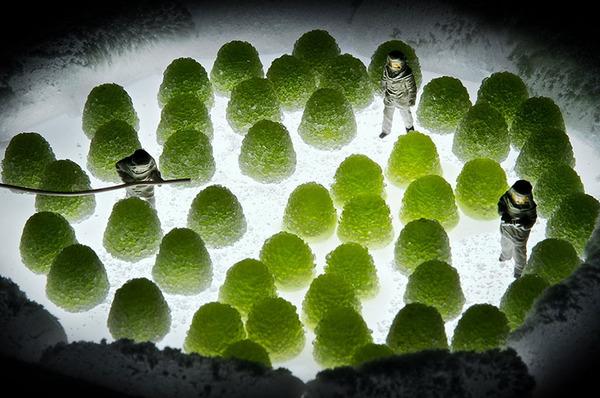 Minimize Food Miniature Diorama By Kass.