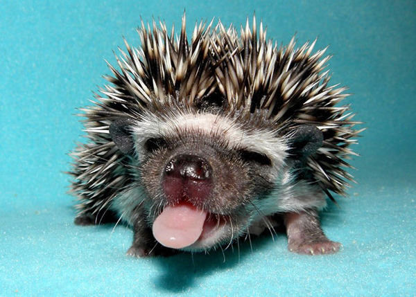 Hilarious Pictures Of Animals With Their Tongues Sticking Out