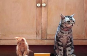 A Cat Gives A Kitten an Unforgettable Life Lesson. It's Hilarious!