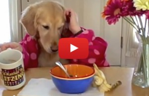 dog eating breakfast