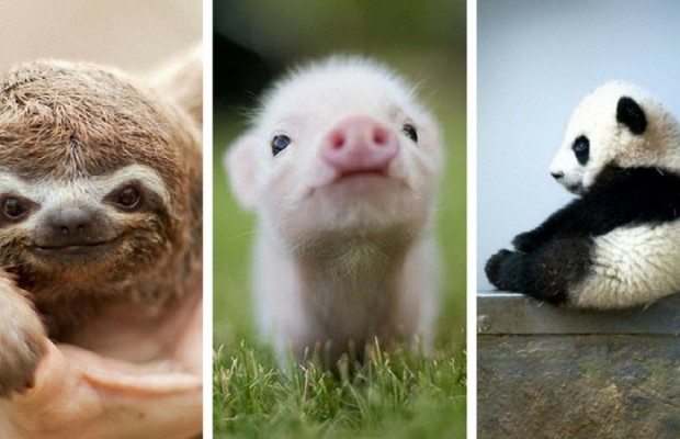 cute baby animals feat