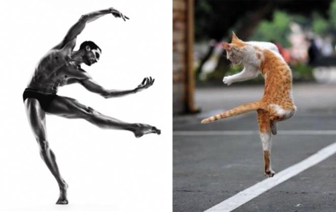 Cats Imitating Models
