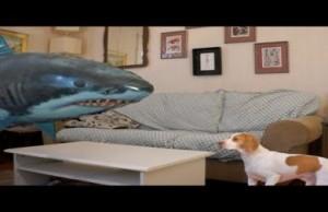 shark and dog