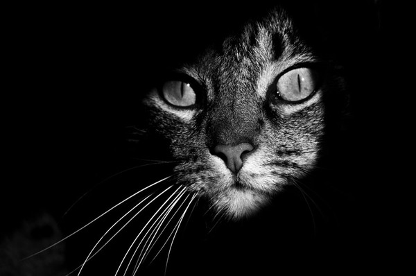 The Mysterious Lives Of Cats Captured In Black And White Photography