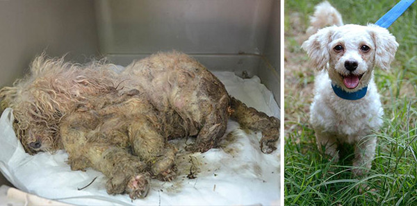 Before-And-After Photos Of Rescued Dogs