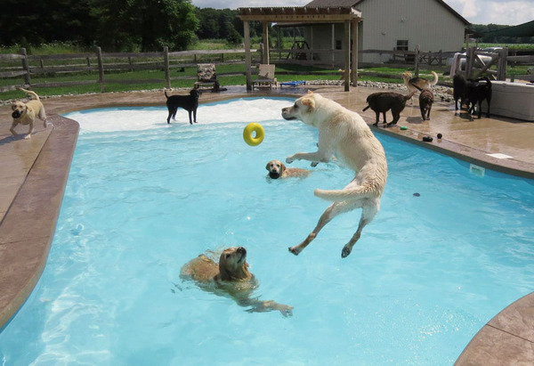 Dog Pool Party Or As I Like To Call It This Is What Happiness Looks Like