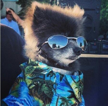 dog winning at life