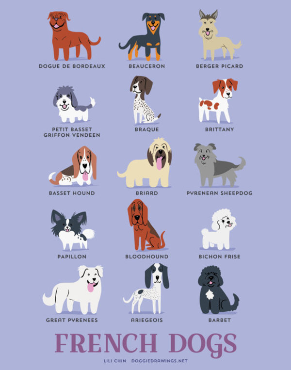 information about dogs - french dogs