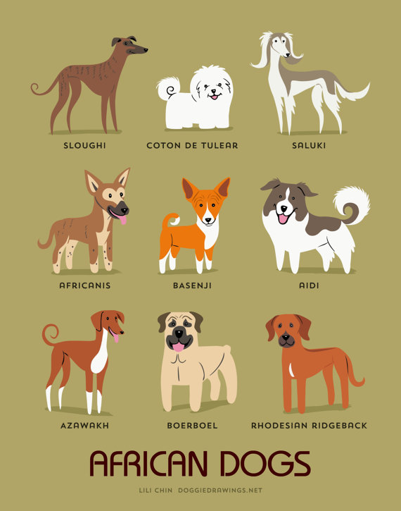 information about dogs - african  dogs