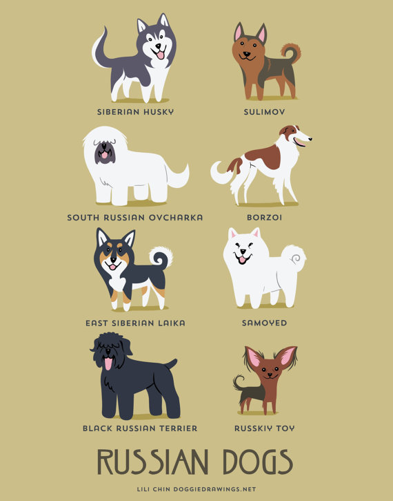 information about dogs - russian  dogs