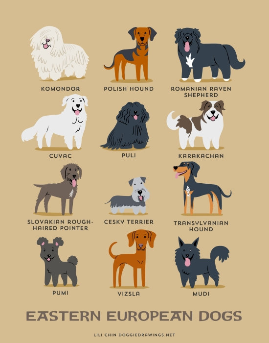 information about dogs - eastern european  dogs