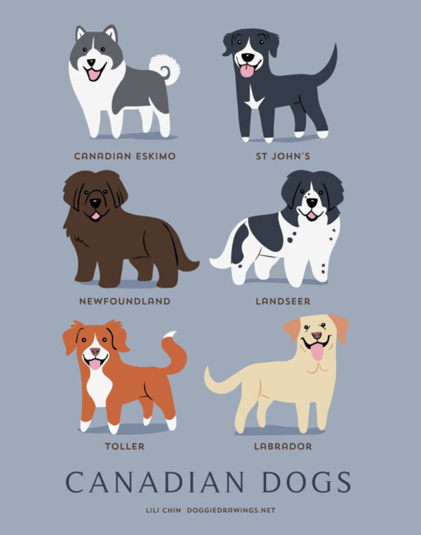 information about dogs - canadian dogs
