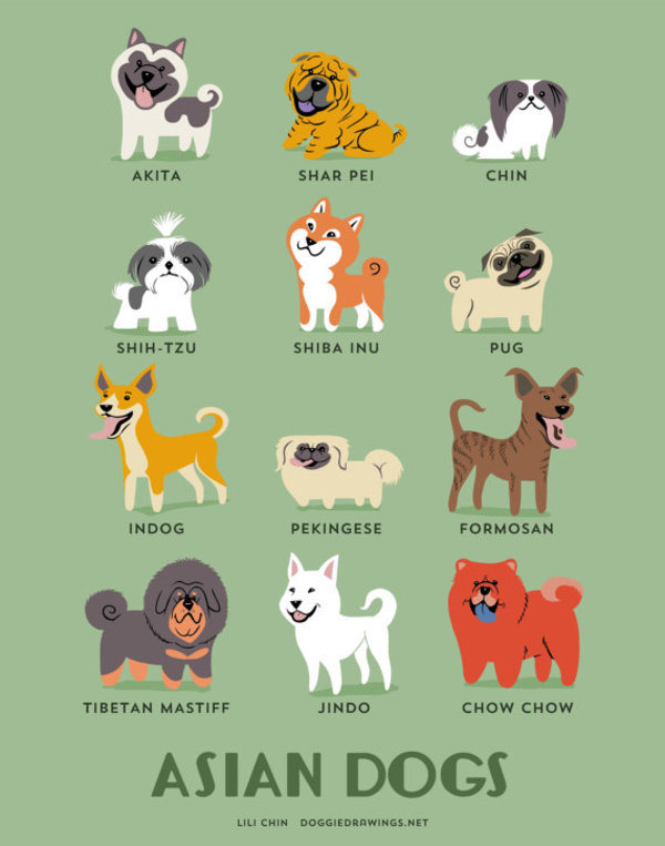 information about dogs - asian dogs