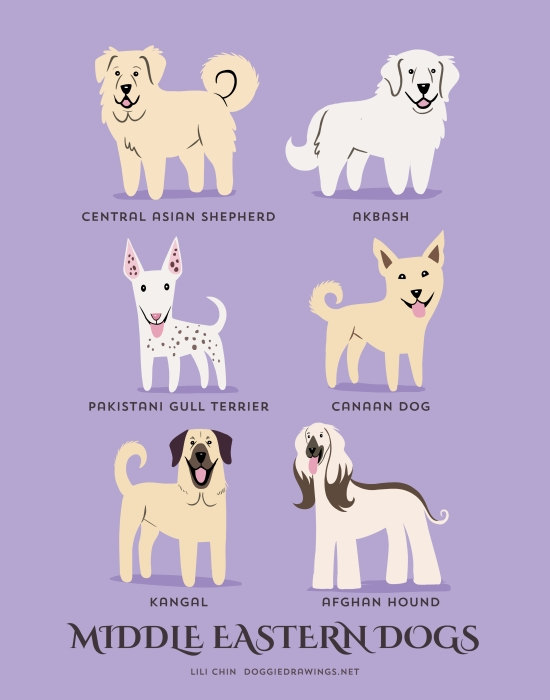 information about dogs - middle eastern  dogs