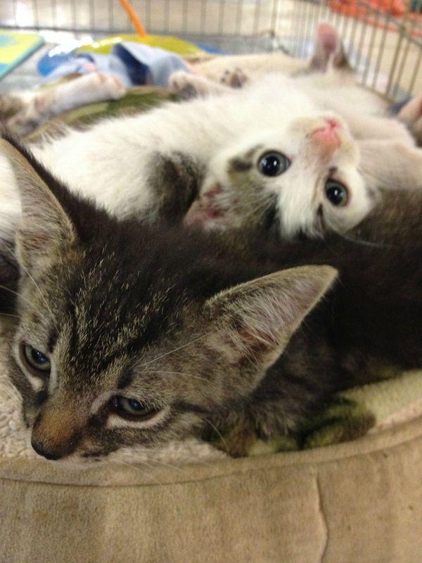 pics of kittens