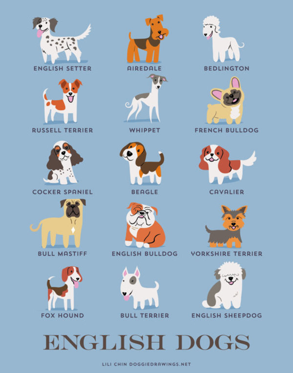information about dogs - english dogs