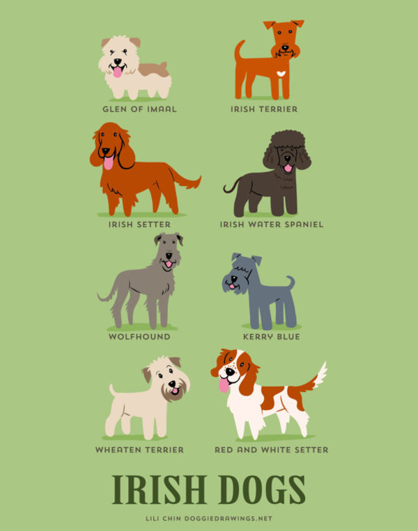 information about dogs - irish dogs