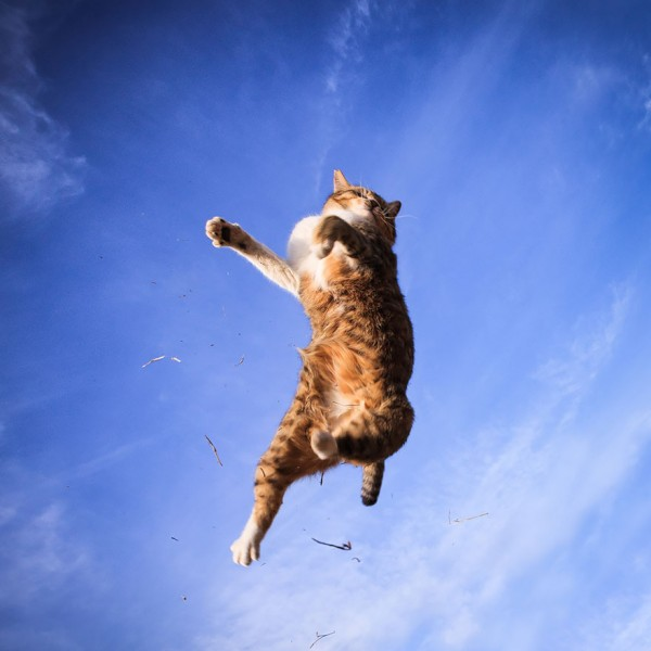 awesome jumping cat