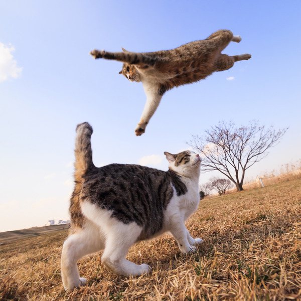 awesome jumping cats